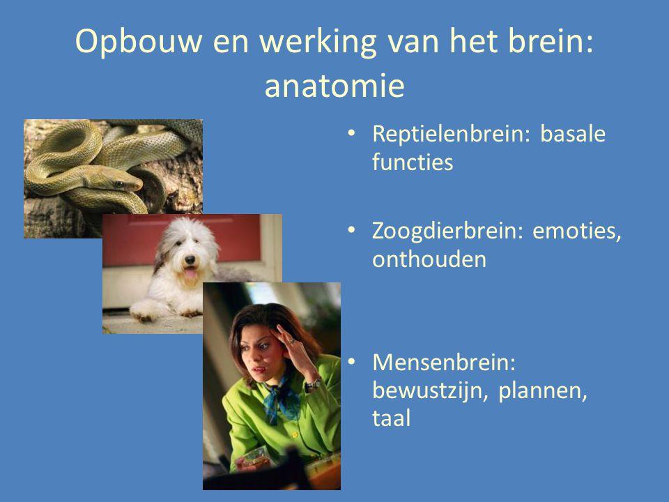 Opbouw en werking van het brein: anatomie Reptielenbrein: basale functies Zoogdierbrein: emoties, onthouden Mensenbrein: bewustzijn, plannen, taal