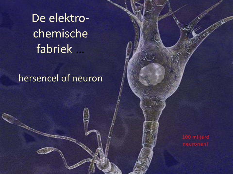 De elektro- chemische fabriek … hersencel of neuron 100 miljard neuronen!