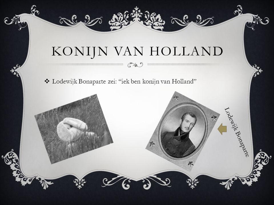 """KONIJN VAN HOLLAND  Lodewijk Bonaparte zei: """"iek ben konijn van Holland"""" Lodewijk Bonaparte"""