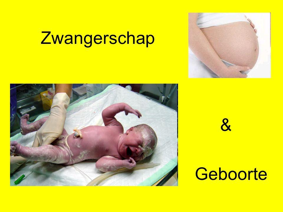 Zwangerschap Geboorte &