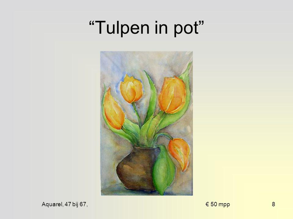 Aquarel, 47 bij 67, € 50 mpp18 Tulpen in keulse pot