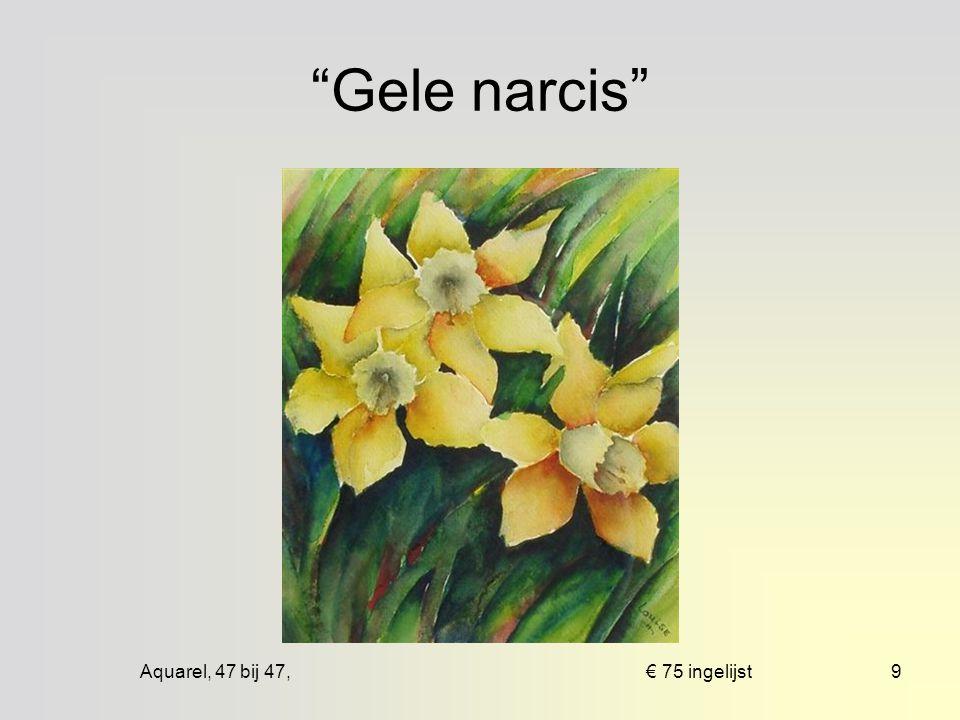 Aquarel, 47 bij 67, € 50 mpp8 Tulpen in pot