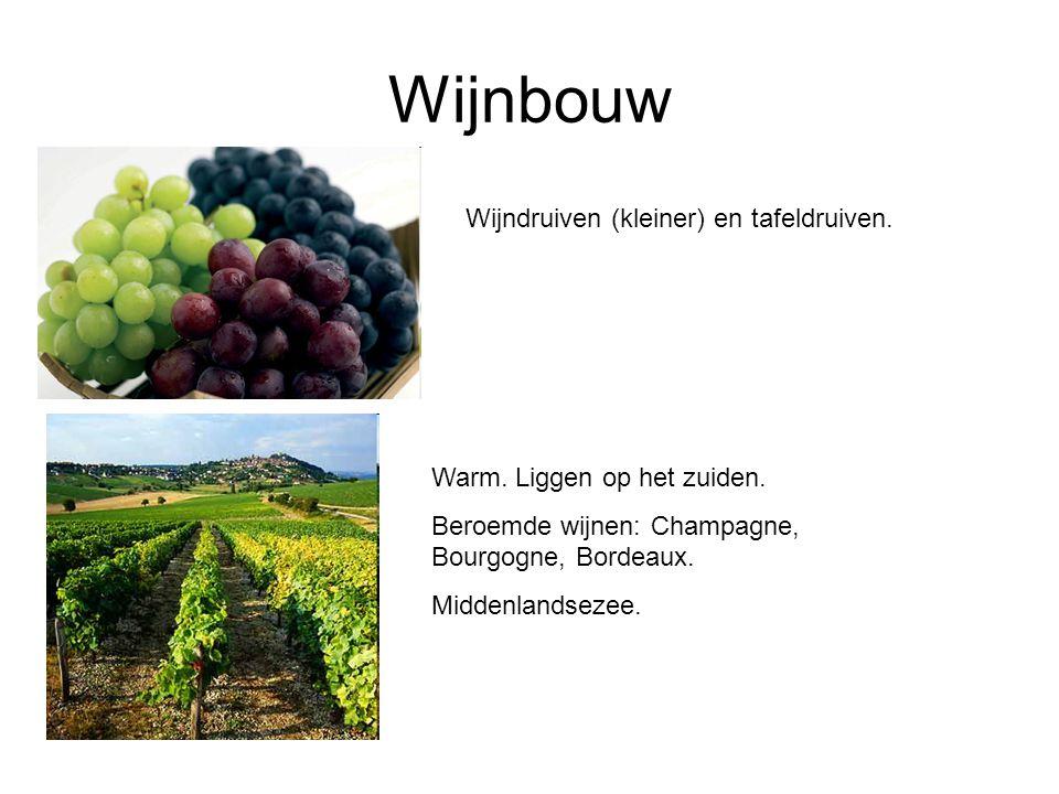 Wijnbouw Wijndruiven (kleiner) en tafeldruiven.Warm.