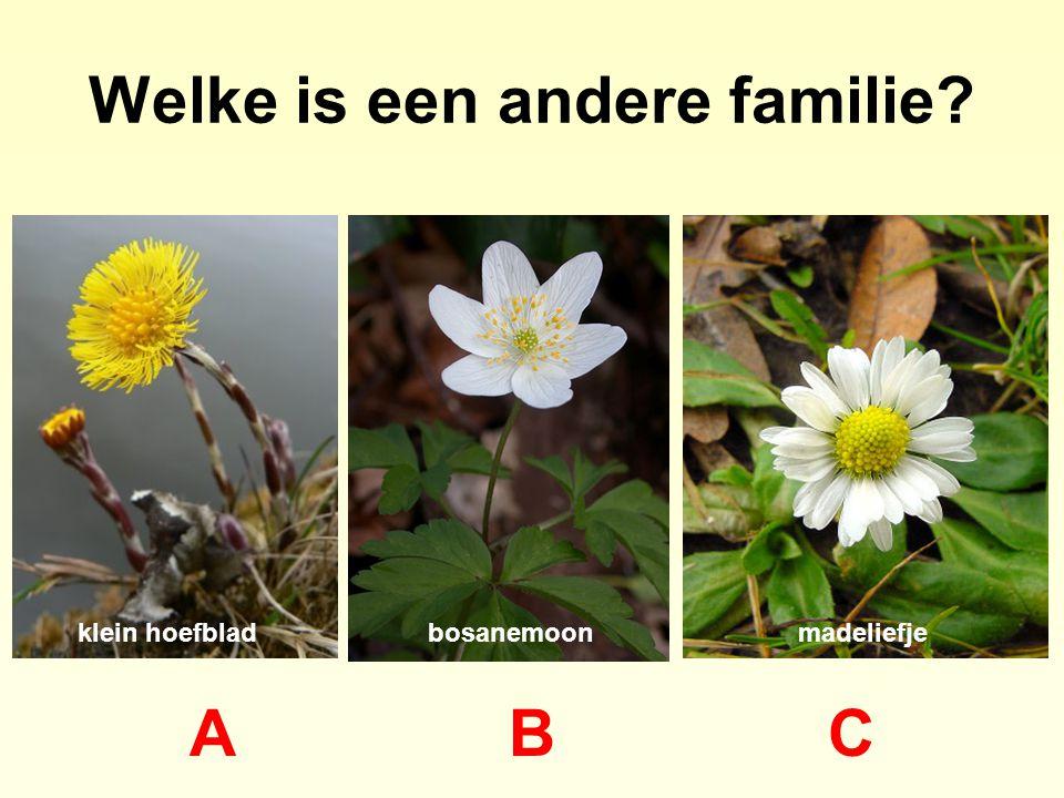Welke is een andere familie? ABCABC klein hoefbladbosanemoonmadeliefje