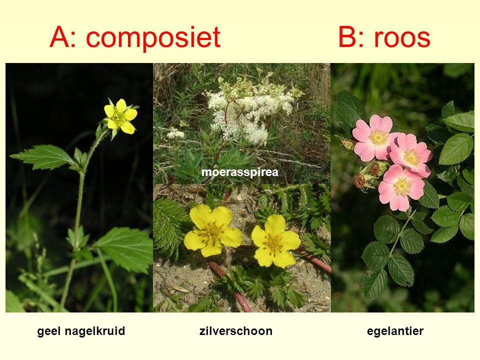 A: composiet B: roos geel nagelkruidzilverschoonegelantier moerasspirea