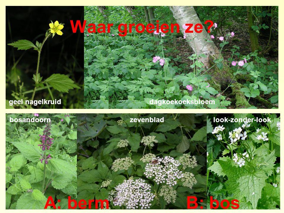 Waar groeien ze? A: bermB: bos geel nagelkruiddagkoekoeksbloem bosandoornzevenbladlook-zonder-look