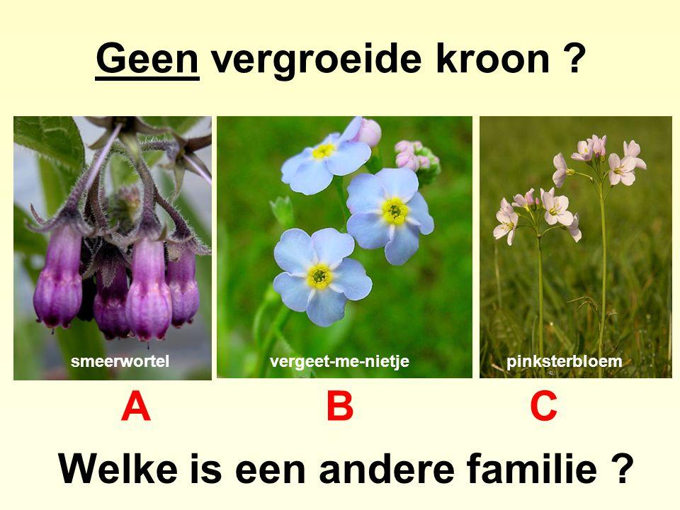 Geen vergroeide kroon ? Welke is een andere familie ? ABCABC smeerwortelvergeet-me-nietjepinksterbloem