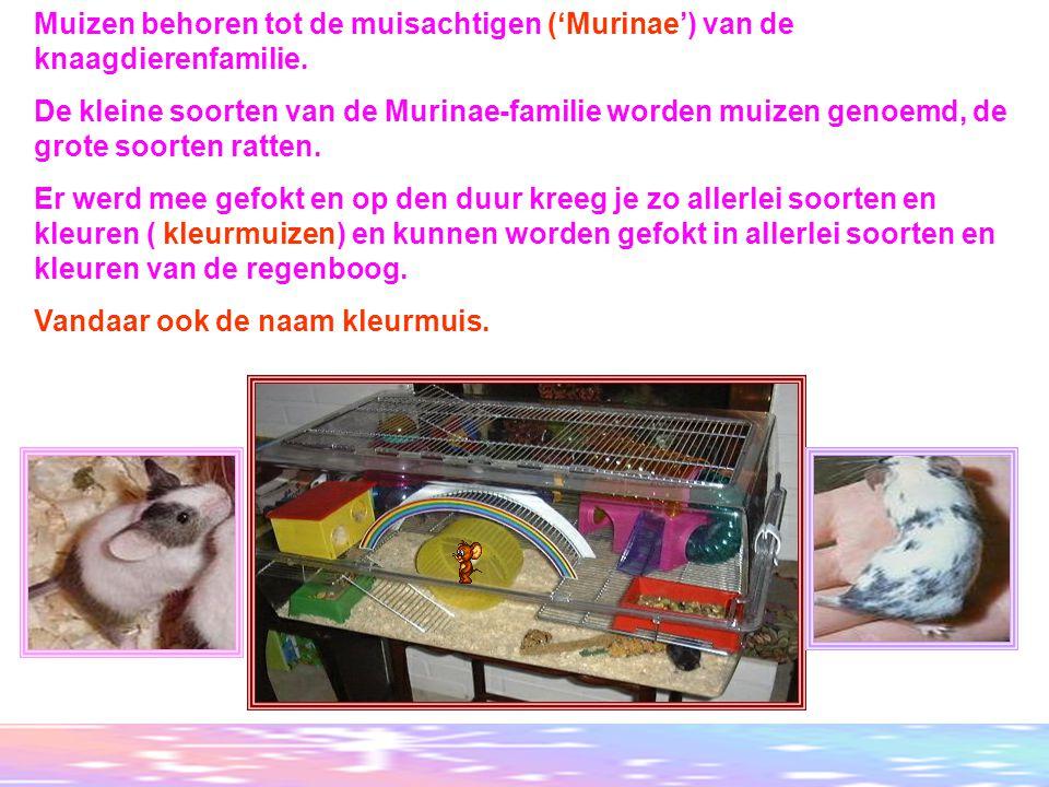made by tillygemaakt voor: www.powerpointsite-bep.nl Muizen behoren tot de muisachtigen ('Murinae') van de knaagdierenfamilie.