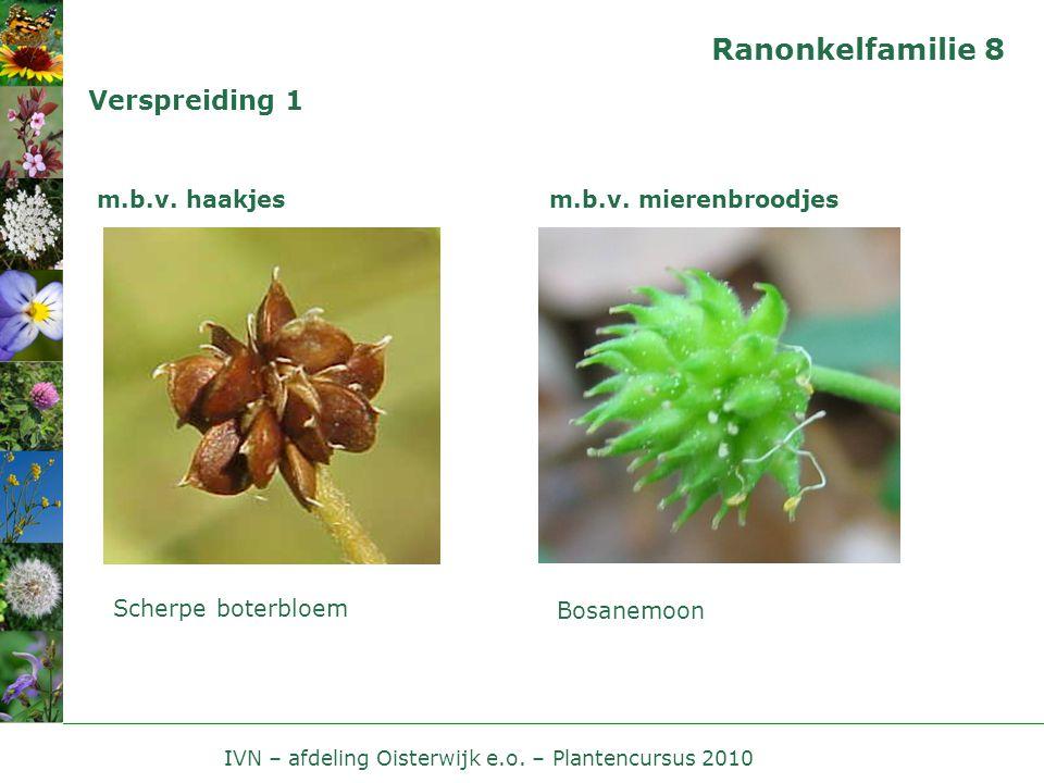 IVN – afdeling Oisterwijk e.o.– Plantencursus 2010 Ranonkelfamilie 9 Verspreiding 2 m.b.v.