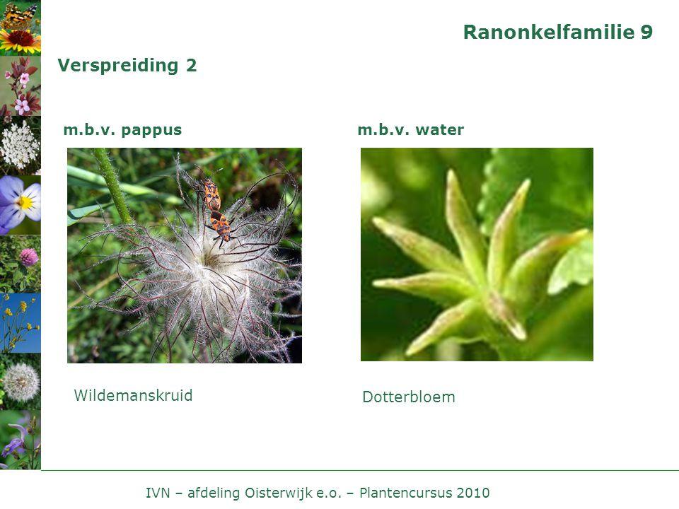 IVN – afdeling Oisterwijk e.o. – Plantencursus 2010 Ranonkelfamilie 9 Verspreiding 2 m.b.v. pappus Wildemanskruid m.b.v. water Dotterbloem