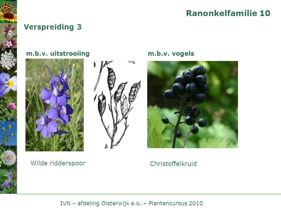 IVN – afdeling Oisterwijk e.o. – Plantencursus 2010 Ranonkelfamilie 10 Verspreiding 3 m.b.v. uitstrooiing Wilde ridderspoor m.b.v. vogels Christoffelk