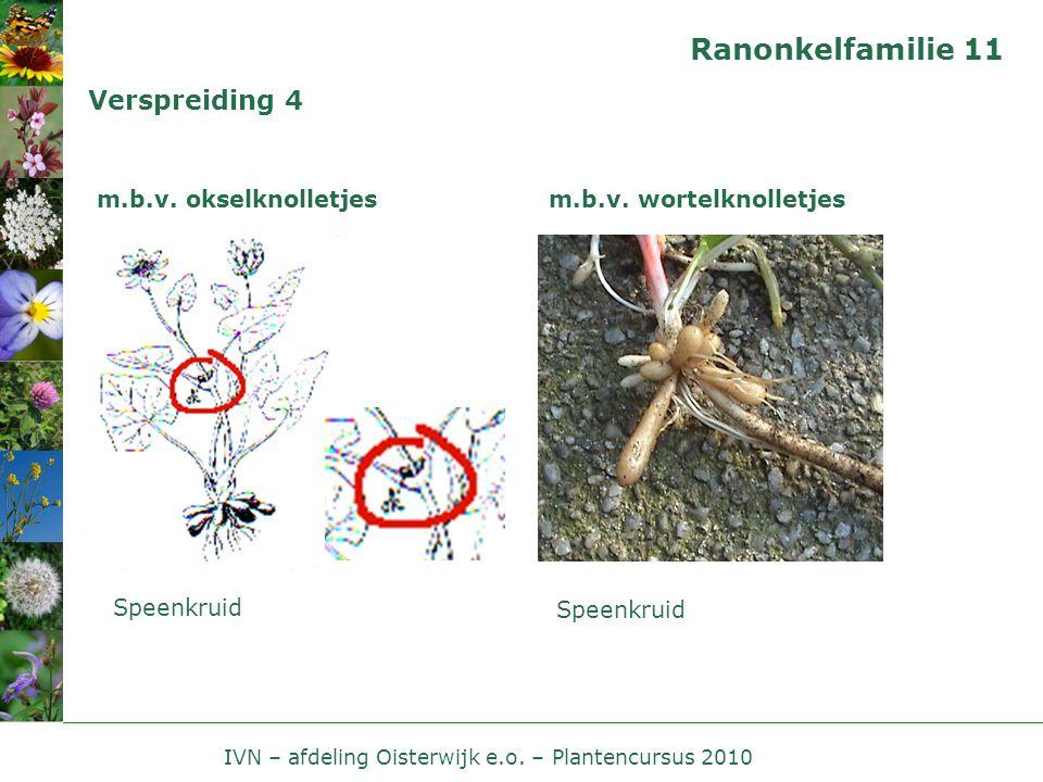 IVN – afdeling Oisterwijk e.o. – Plantencursus 2010 Ranonkelfamilie 11 Verspreiding 4 m.b.v. okselknolletjes Speenkruid m.b.v. wortelknolletjes Speenk