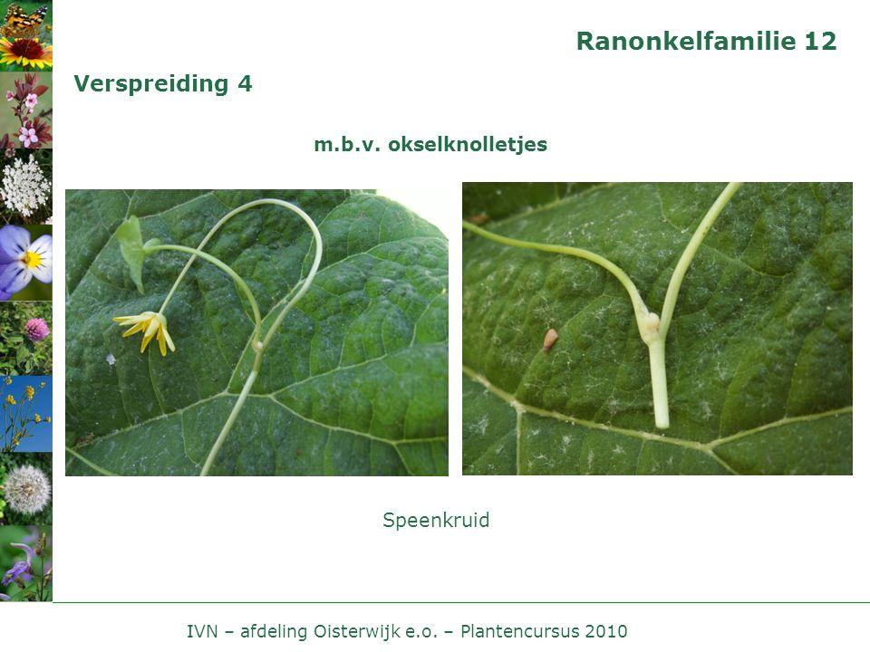 IVN – afdeling Oisterwijk e.o. – Plantencursus 2010 Ranonkelfamilie 12 Verspreiding 4 m.b.v. okselknolletjes Speenkruid