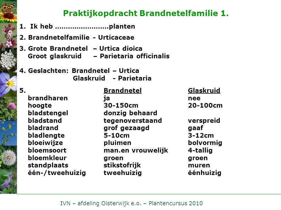 IVN – afdeling Oisterwijk e.o. – Plantencursus 2010 Praktijkopdracht Brandnetelfamilie 1. 1. Ik heb …………………….planten 2. Brandnetelfamilie - Urticaceae