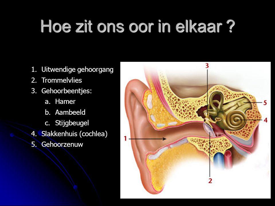 Hoe zit ons oor in elkaar ? 1.Uitwendige gehoorgang 2.Trommelvlies 3.Gehoorbeentjes: a.Hamer b.Aambeeld c.Stijgbeugel 4.Slakkenhuis (cochlea) 5.Gehoor