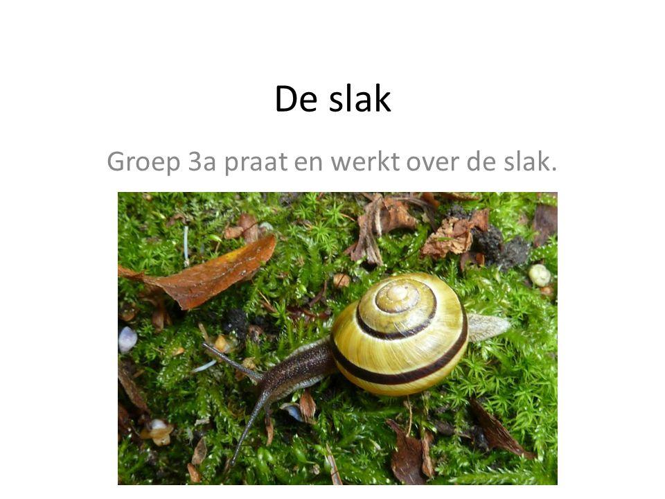 De slak Groep 3a praat en werkt over de slak.