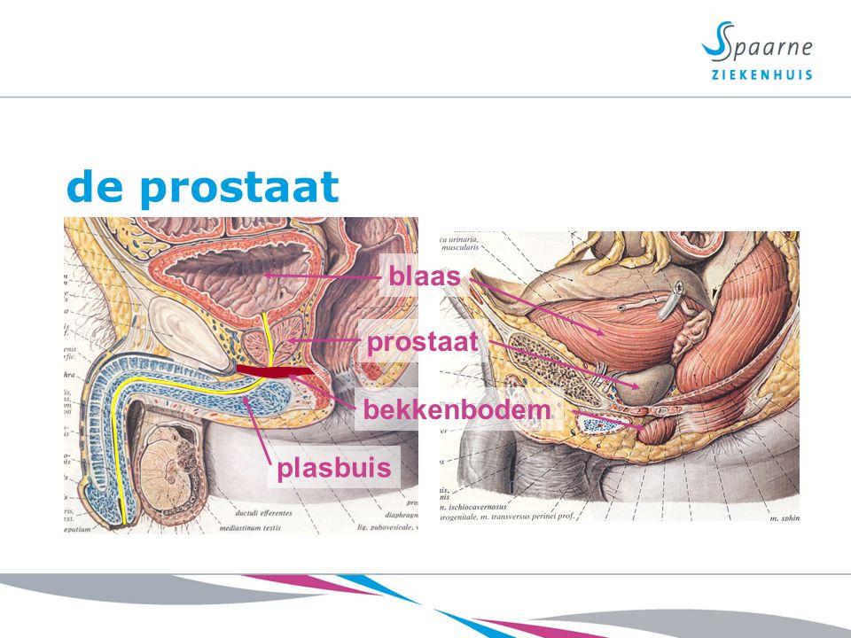 Prostaatkanker Meest voorkomende vorm van kanker bij mannen Komt vooral voor bij oudere mannen Groeit meestal langzaam Geeft meestal pas laat klachten Veel mannen overlijden MET, niet AAN prostaatkanker
