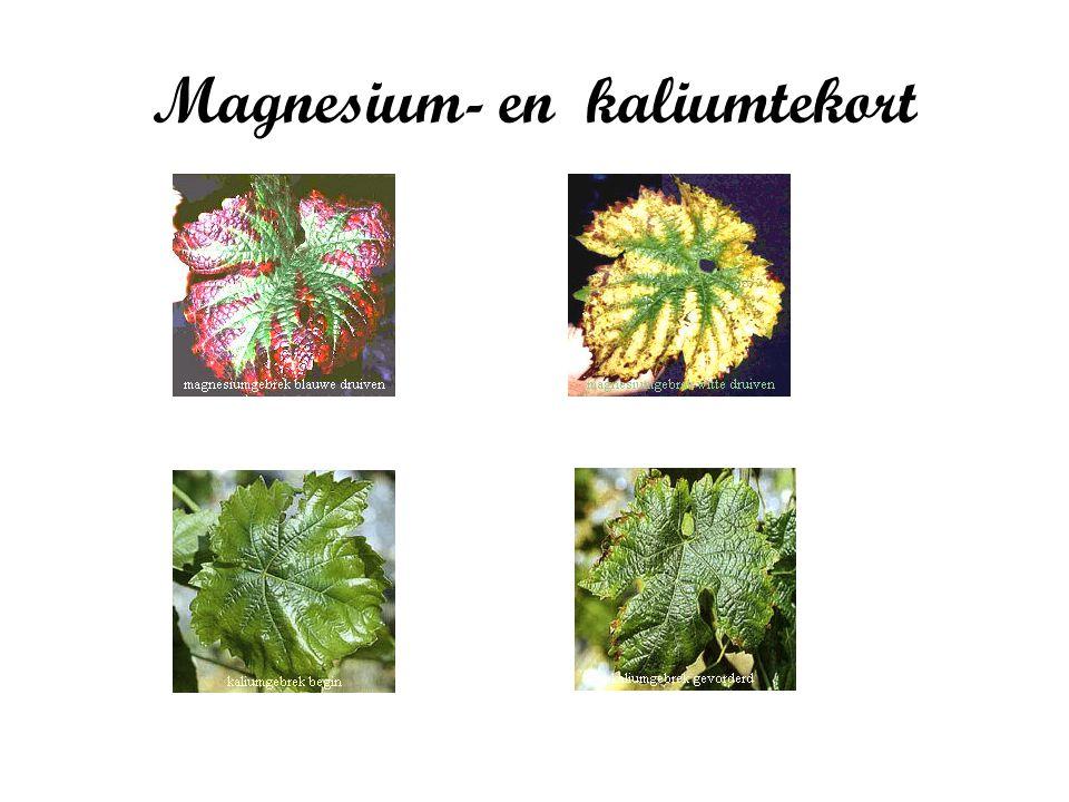 Magnesium- en kaliumtekort