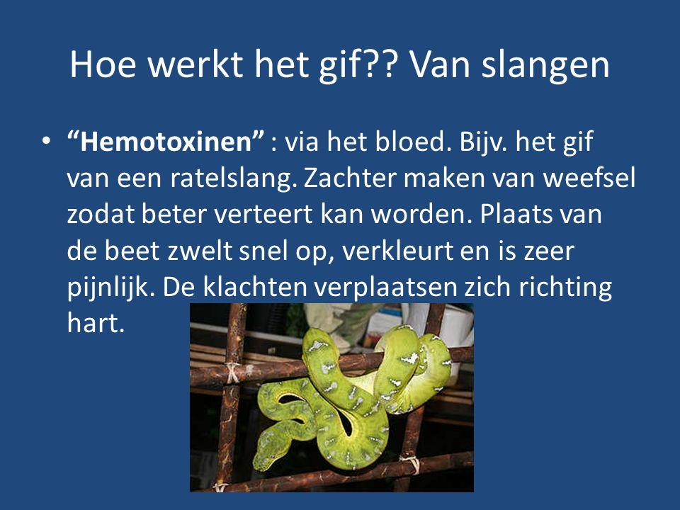 """Hoe werkt het gif?? Van slangen """"Hemotoxinen"""" : via het bloed. Bijv. het gif van een ratelslang. Zachter maken van weefsel zodat beter verteert kan wo"""