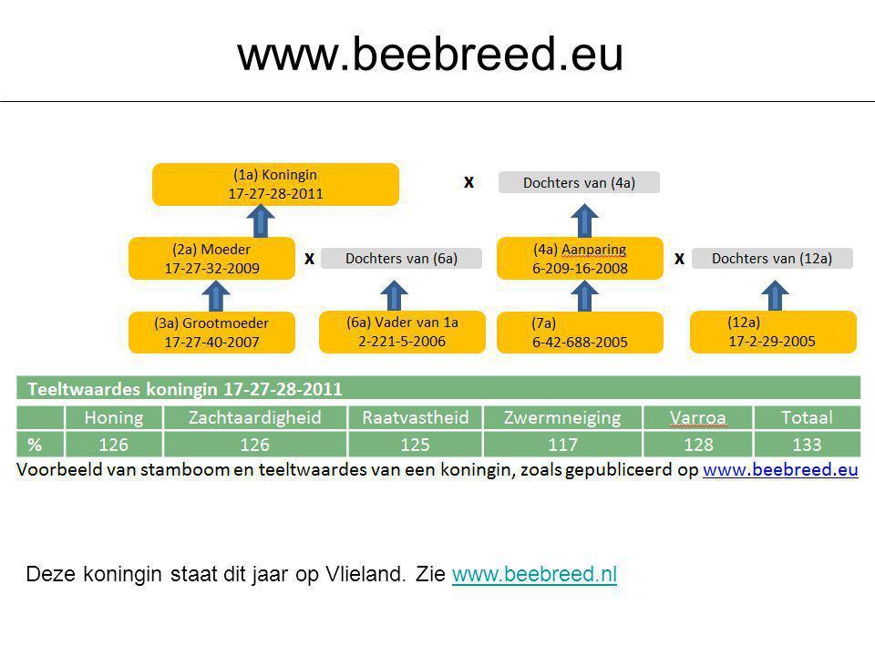 Deze koningin staat dit jaar op Vlieland. Zie www.beebreed.nlwww.beebreed.nl