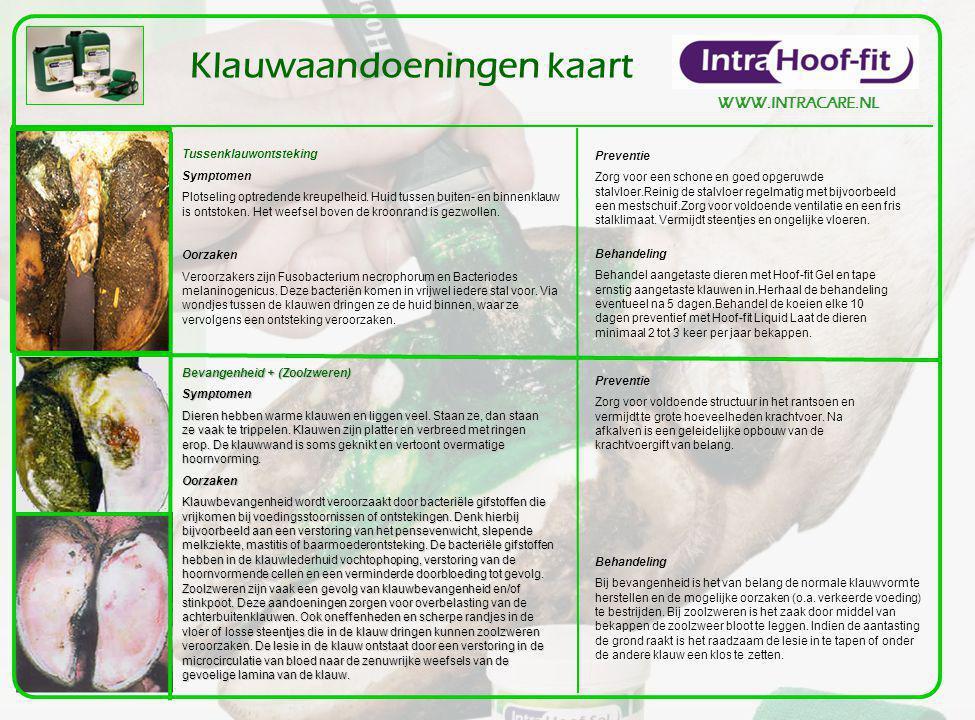 WWW.INTRACARE.NL Klauwaandoeningen kaart Tussenklauwontsteking Symptomen Plotseling optredende kreupelheid. Huid tussen buiten- en binnenklauw is onts