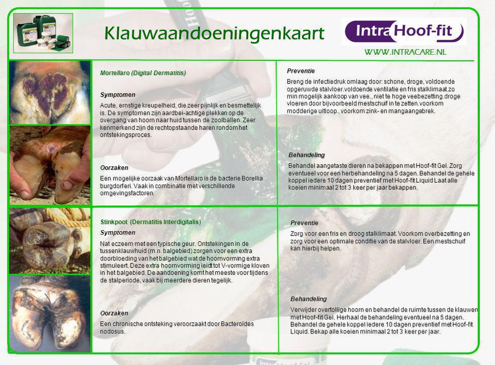 WWW.INTRACARE.NL Klauwaandoeningenkaart Mortellaro (Digital Dermatitis) Symptomen Acute, ernstige kreupelheid, die zeer pijnlijk en besmettelijk is.
