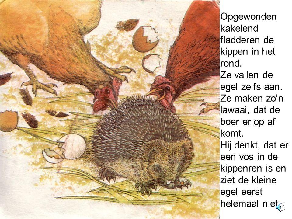 De egel vindt eieren.Hij bijt een gat in een eierschaal en slurpt de inhoud op.