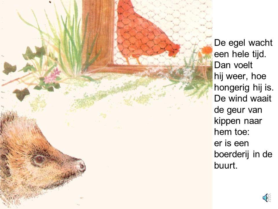 De egel wacht een hele tijd.Dan voelt hij weer, hoe hongerig hij is.