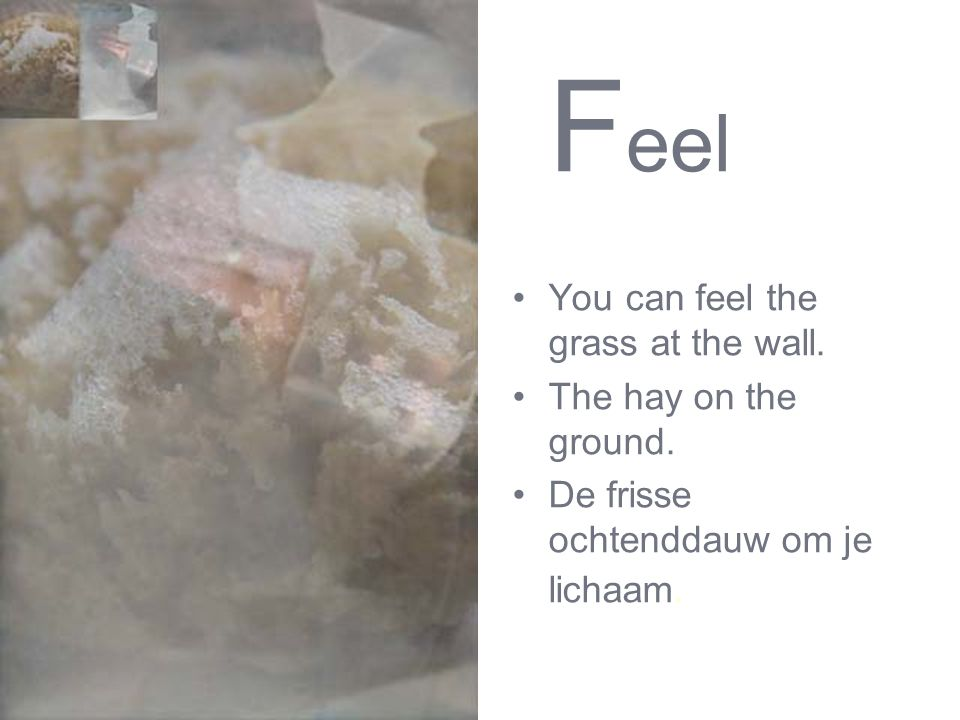 F eel You can feel the grass at the wall. The hay on the ground. De frisse ochtenddauw om je lichaam.