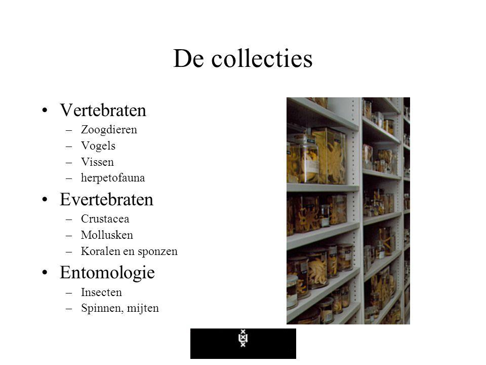 De collecties Vertebraten –Zoogdieren –Vogels –Vissen –herpetofauna Evertebraten –Crustacea –Mollusken –Koralen en sponzen Entomologie –Insecten –Spinnen, mijten