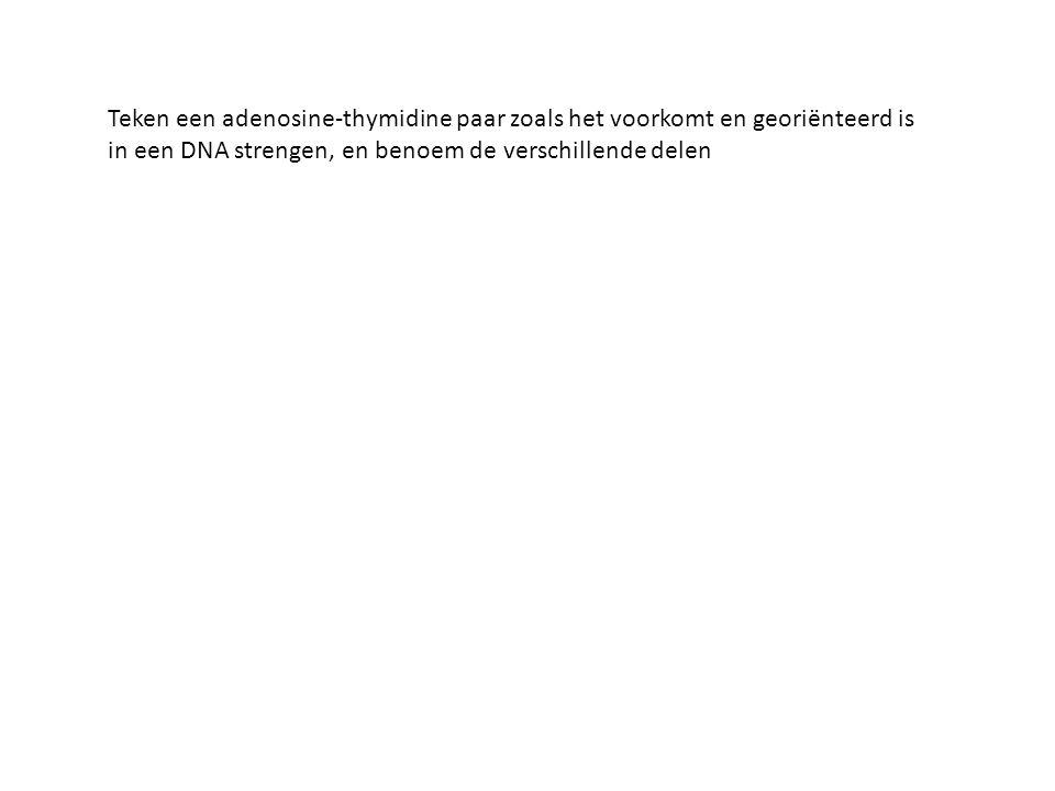 Teken een adenosine-thymidine paar zoals het voorkomt en georiënteerd is in een DNA strengen, en benoem de verschillende delen