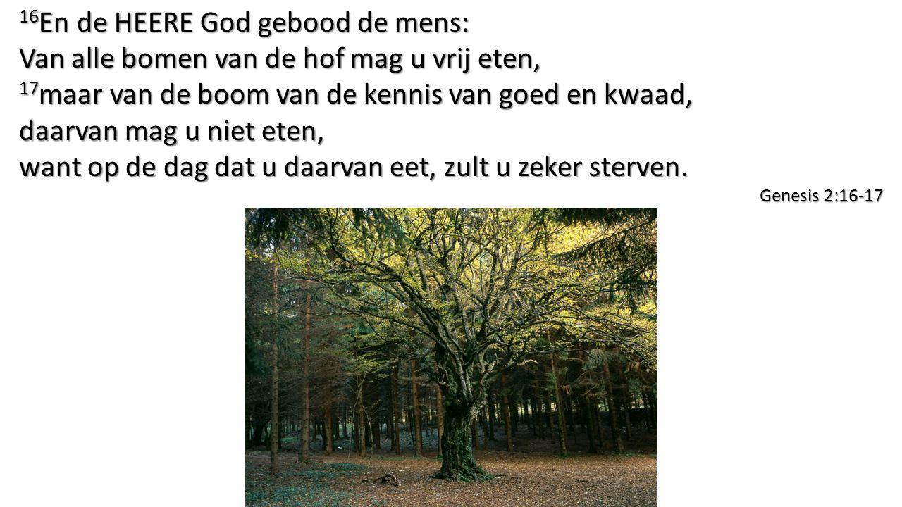16 En de HEERE God gebood de mens: Van alle bomen van de hof mag u vrij eten, 17 maar van de boom van de kennis van goed en kwaad, daarvan mag u niet