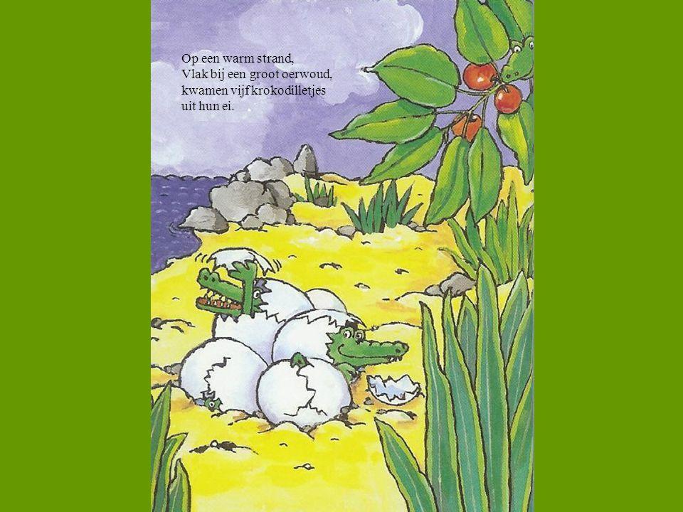 Op een warm strand, Vlak bij een groot oerwoud, kwamen vijf krokodilletjes uit hun ei.