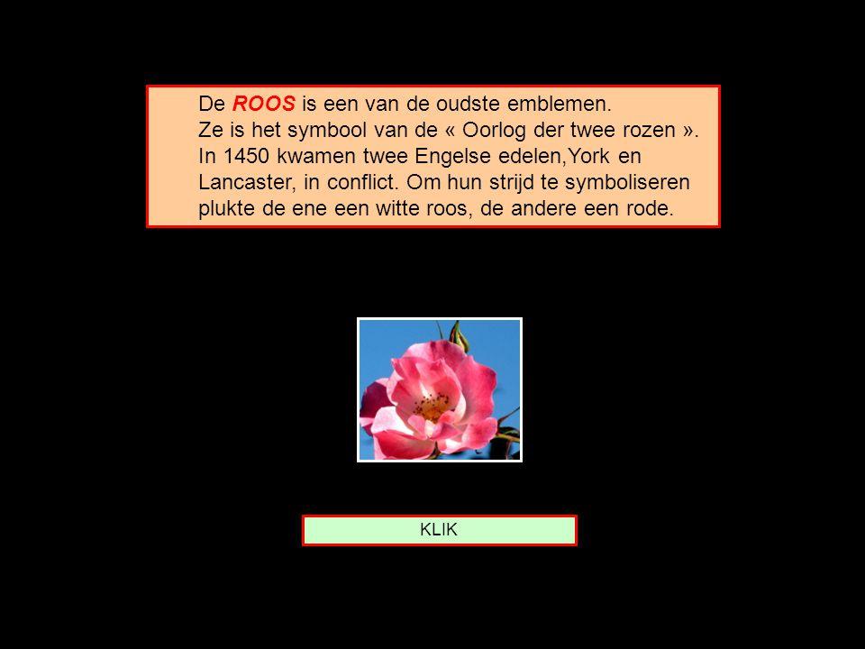 De ROOS is een van de oudste emblemen.Ze is het symbool van de « Oorlog der twee rozen ».