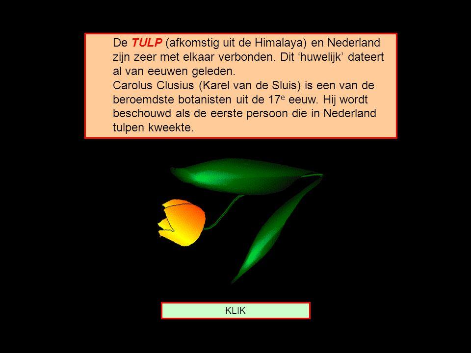 De TULP (afkomstig uit de Himalaya) en Nederland zijn zeer met elkaar verbonden.
