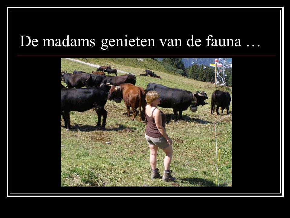 De madams genieten van de fauna …
