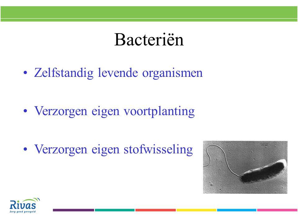 Infectie meestal te bestrijden met antibiotica Deze grijpen o.a.