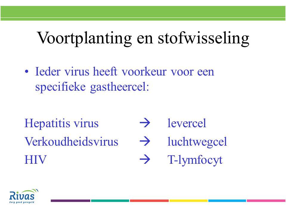 Voortplanting en stofwisseling Ieder virus heeft voorkeur voor een specifieke gastheercel: Hepatitis virus  levercel Verkoudheidsvirus  luchtwegcel HIV  T-lymfocyt