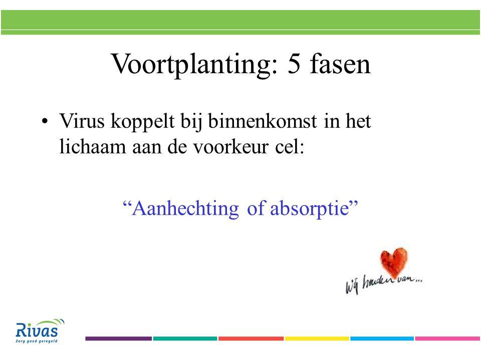 Voortplanting: 5 fasen Virus koppelt bij binnenkomst in het lichaam aan de voorkeur cel: Aanhechting of absorptie