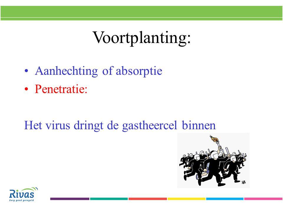 Voortplanting: Aanhechting Penetratie Reproductie: Het virus vraagt de gastheercel om voortaan nieuw virus te maken en de stofwisseling te verzorgen