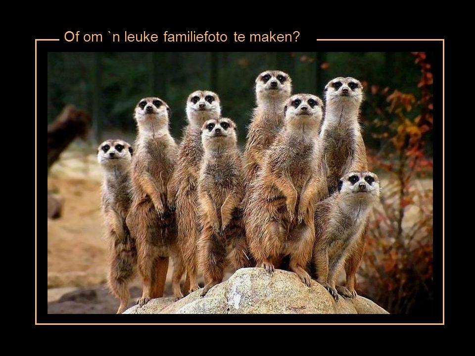 Of om `n leuke familiefoto te maken?