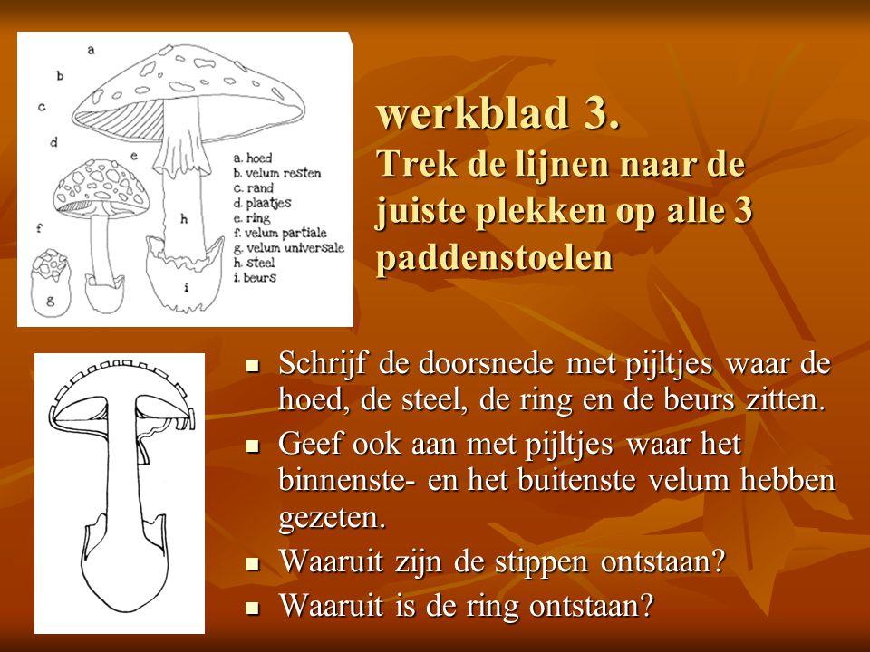 werkblad 3. Trek de lijnen naar de juiste plekken op alle 3 paddenstoelen Schrijf de doorsnede met pijltjes waar de hoed, de steel, de ring en de beur