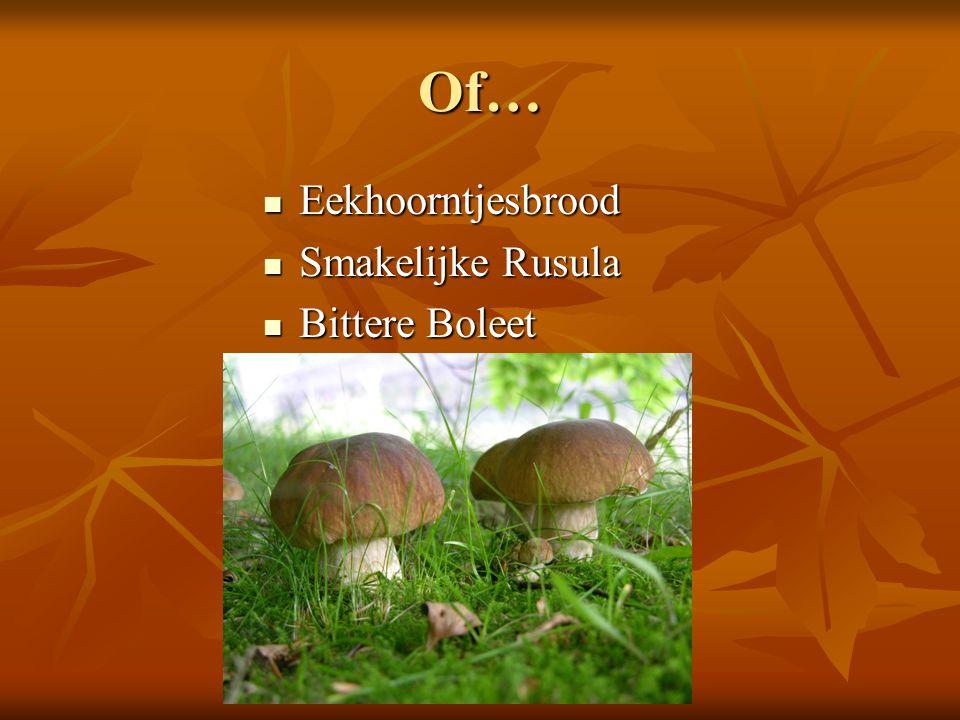 Of… Eekhoorntjesbrood Eekhoorntjesbrood Smakelijke Rusula Smakelijke Rusula Bittere Boleet Bittere Boleet