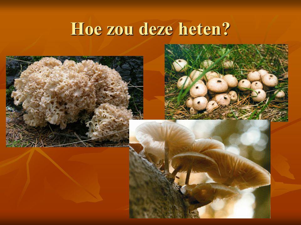 Dit gezamenlijk delen van wortels heet micorrhiza