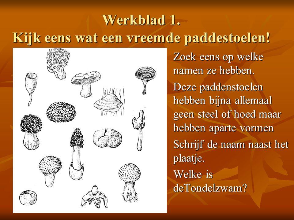 Werkblad 1. Kijk eens wat een vreemde paddestoelen! Zoek eens op welke namen ze hebben. Deze paddenstoelen hebben bijna allemaal geen steel of hoed ma