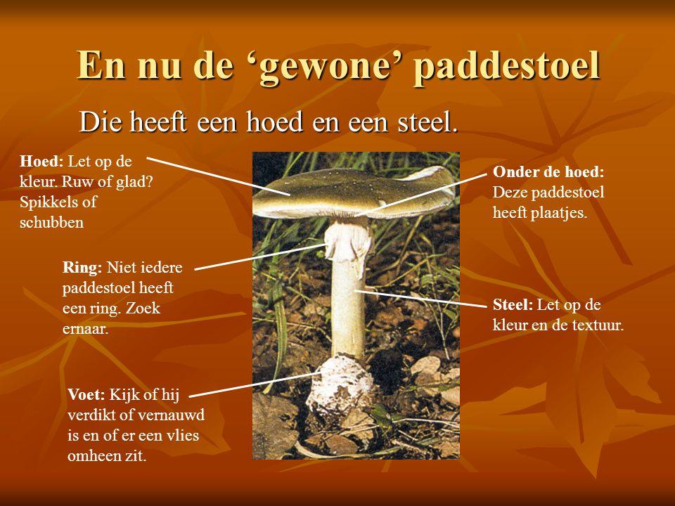 Kringlopen http://www.natuurinformatie.nl/nnm.dossiers/n atuurdatabase.nl/i002304.html http://www.natuurinformatie.nl/nnm.dossiers/n atuurdatabase.nl/i002304.html http://www.natuurinformatie.nl/nnm.dossiers/n atuurdatabase.nl/i002304.html http://www.natuurinformatie.nl/nnm.dossiers/n atuurdatabase.nl/i002304.html Waar is de plek van paddenstoelen in deze kringloop.