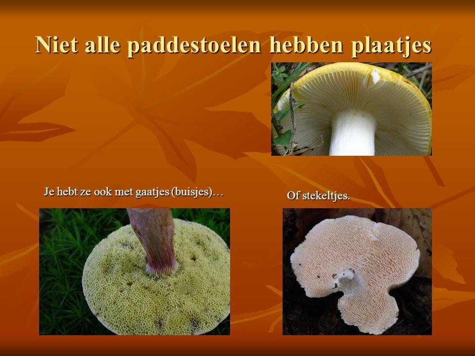 Groeiwijze mycelium Filmpje van een rottende appel http://www.eduboek.nl/schimmels-ruimen-appel-a- 122.html http://www.eduboek.nl/schimmels-ruimen-appel-a- 122.html