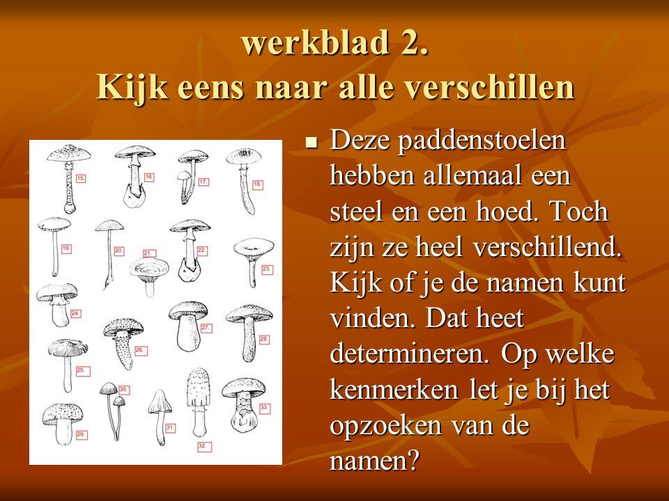 Extra opdrachten Bedenk en teken zelf een kringloop Eigen werkstuk over kringlopen http://www.natuurinformatie.nl/nnm.dossiers/natuurd atabase.nl/i002304.html http://www.natuurinformatie.nl/nnm.dossiers/natuurd atabase.nl/i002304.html Maken ecosphere in glazen potten en/of petflessen Lezen eduboek https://www.eduboek.nl/gratisswfs/5614- paddenstoelen.swf https://www.eduboek.nl/gratisswfs/5614- paddenstoelen.swf Een eigen werkstuk maken over wat je nu van paddenstoelen weet