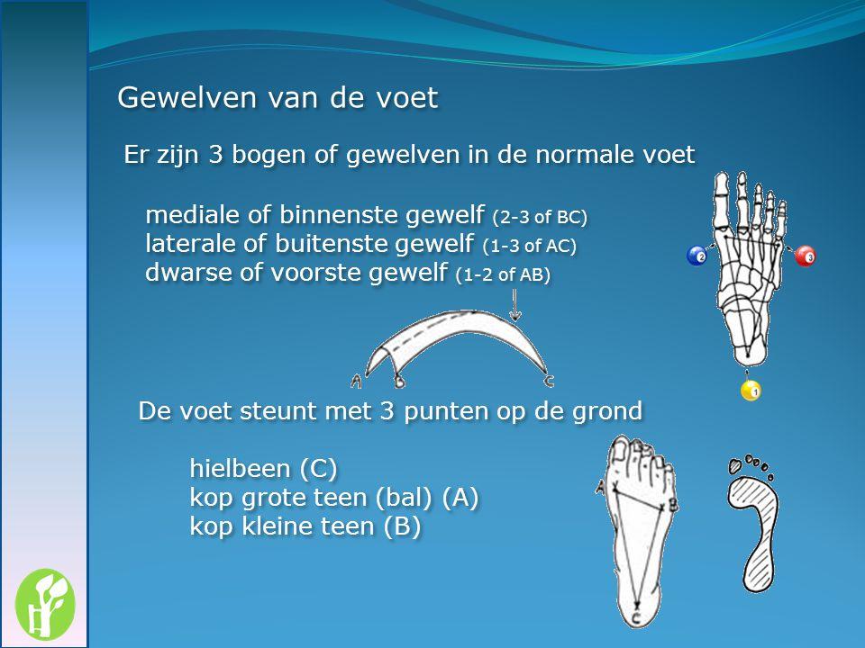 Gewelven van de voet mediale of binnenste gewelf (2-3 of BC) laterale of buitenste gewelf (1-3 of AC) dwarse of voorste gewelf (1-2 of AB) Er zijn 3 b