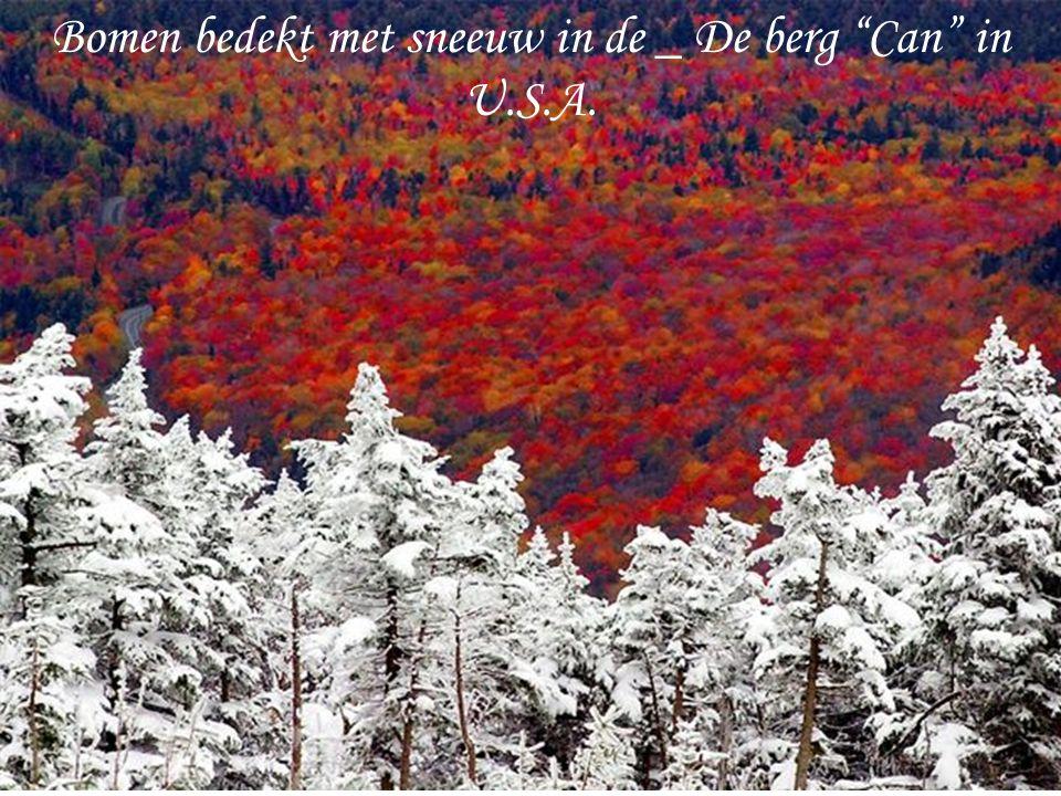 Bomen bedekt met sneeuw in de _ De berg Can in U.S.A.